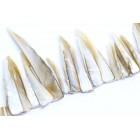 Kriauklių karoliukai - dantukai